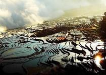 Yuanyang  rizières en terrasses