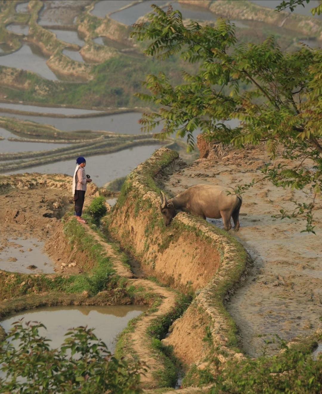 Avis Yuanyang