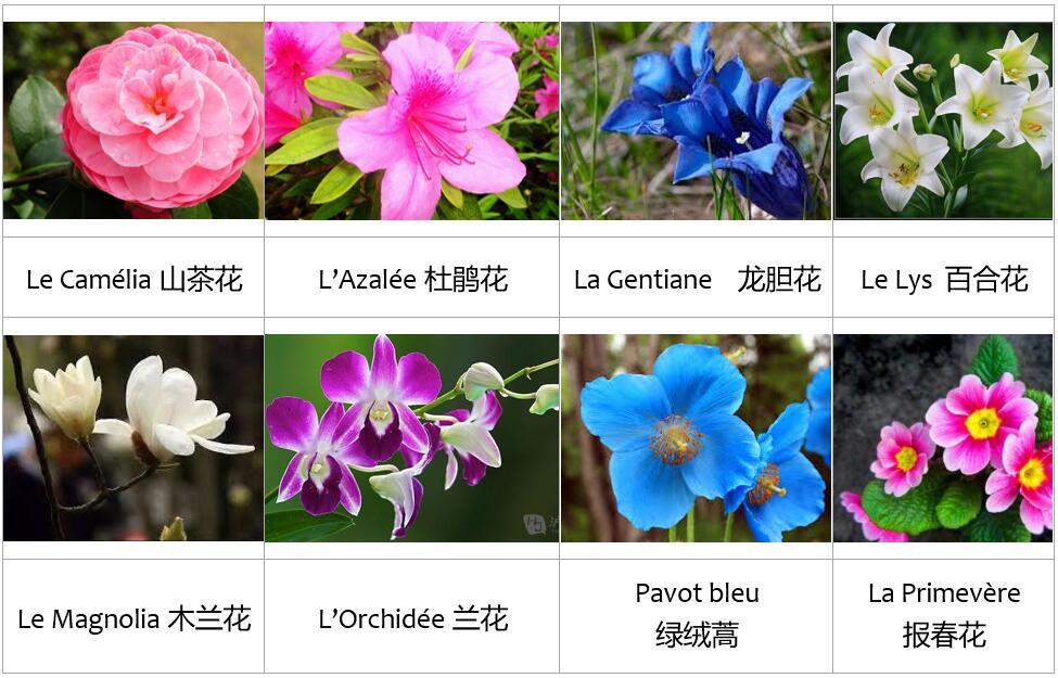 voyage yunnan faune et flore
