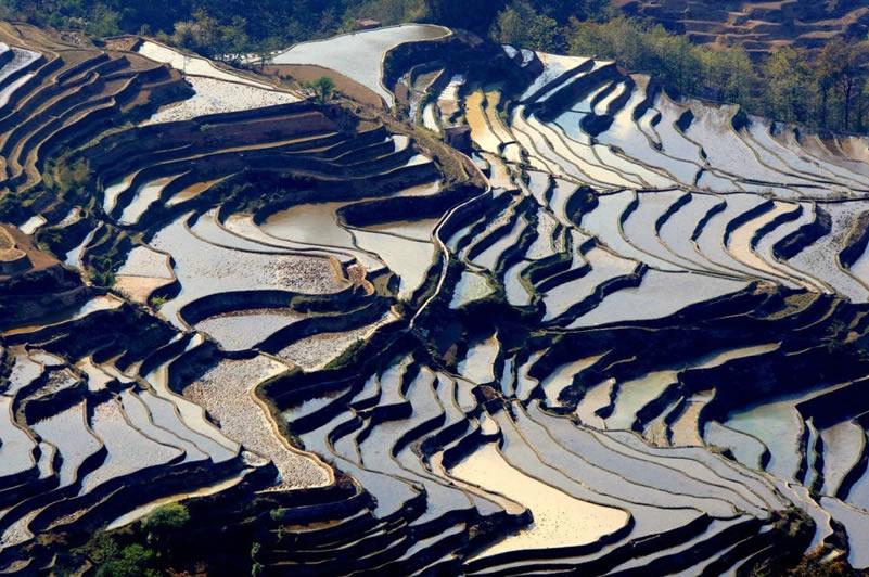 Rizieres en terrasses Laoyingzui Yuanyang Yunnan