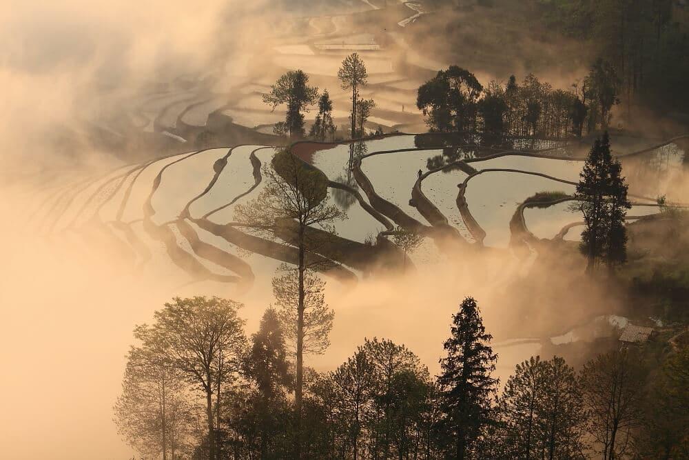 Rizieres matin Duoyishu Yuanyang
