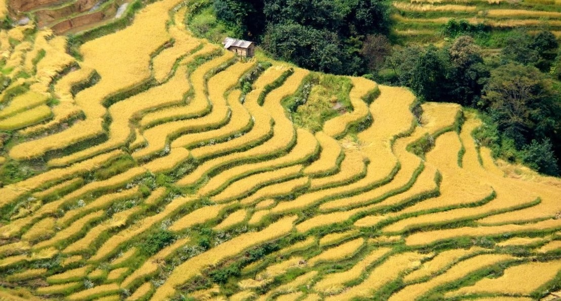 les rizieres de Yuanyang en automne