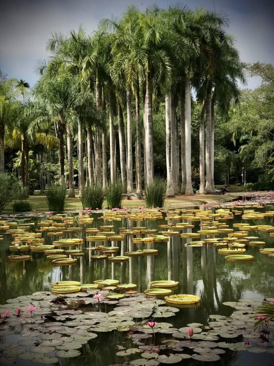 la forêt tropicale du Xishuangbanna